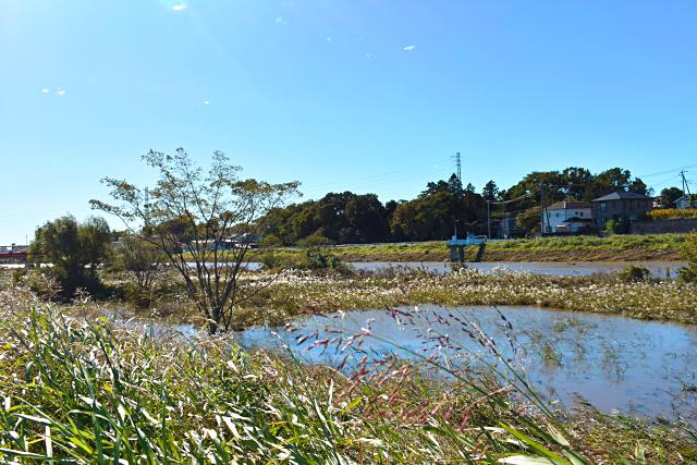 緑豊かな新河岸川
